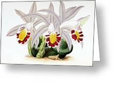Orchid, Pleione Lagenaria, 1880 Greeting Card