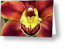 Orchid Queen Greeting Card