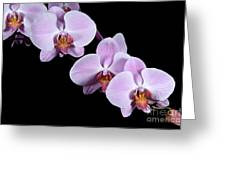 Pink Orchid I Greeting Card