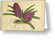 Orchid Saccolabium Ampullaceum  Greeting Card