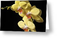 Orchid Set Against Black. Greeting Card