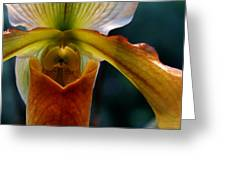 Orchid Slipper Greeting Card