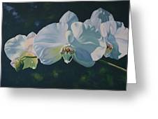 Orchid Song Greeting Card