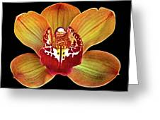 Orchid Splendor Greeting Card