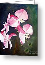 Orchid Study IIi Greeting Card