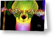 Orchid Study One Greeting Card