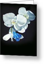 Orchid Treat Greeting Card