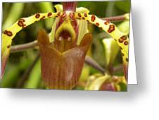 Orchid V Greeting Card