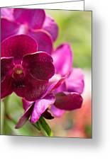 Orchid Vanda Ratchaburi Waxy Red Greeting Card