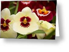 Orchid Vii Greeting Card