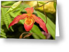 orchid XV Greeting Card