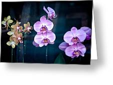 Orchidae Greeting Card
