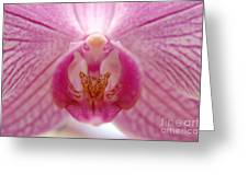 Orchidea Greeting Card