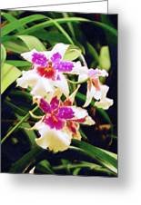 Orchids 1 Greeting Card