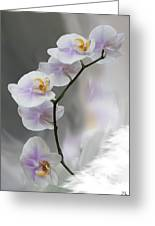 Orchids 2010 Greeting Card