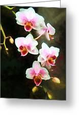 Orchids Abound Greeting Card