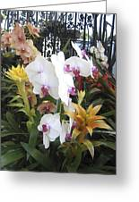 Orchids And Iron Greeting Card