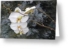 Orchids And Water Greeting Card