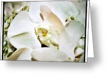 Orchids For His Majesty. In Loving Greeting Card