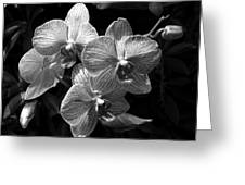 Orchids In Black And White Greeting Card