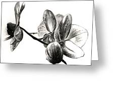 Orchids In Black Greeting Card