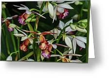 Orchids In Bloom Greeting Card