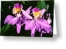 Orchids In Costa Rica Greeting Card