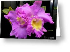 Orchids In Fuchsia  Greeting Card