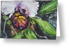 Orchids In July Greeting Card