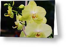 Orchids In New York Greeting Card