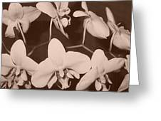 Orchids In Sepia Greeting Card