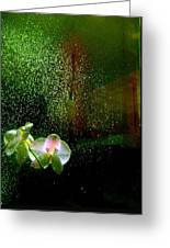Orchids In The Rain Greeting Card