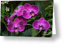 Orchids In Vivid Pink  Greeting Card