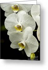Orchids Kauai Greeting Card