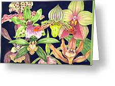 Orchids  Greeting Card by Lucy Arnold