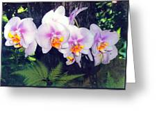 Orchids Of Hawaii Greeting Card