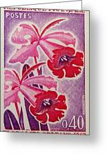 Orchids Of Orleans France 1967 Greeting Card