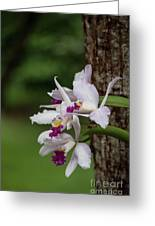 Orchids On A Tree Greeting Card