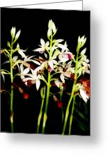 Orchids On Black Greeting Card