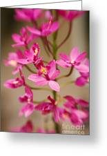 Orchids On Stem Greeting Card