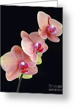 Orchids Reach For The Rainbow Greeting Card