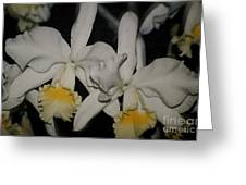 Orchids Satin Greeting Card
