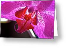 Orchid's Tongue Greeting Card