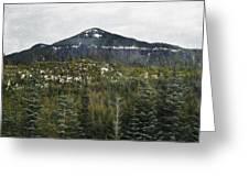 Oregon Cascade Range Forest Greeting Card