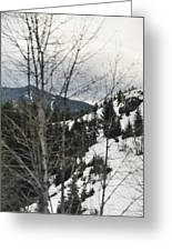 Oregon Cascade Range Trees Greeting Card