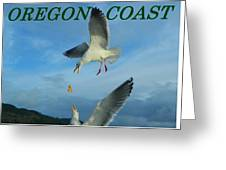 Oregon Coast Amazing Seagulls Greeting Card