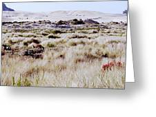 Oregon Dunes 6 Greeting Card