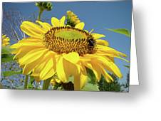 Oregon Gardens Silverton Sunflower Honeybee Baslee  Greeting Card