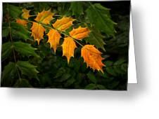 Oregon Grape Autumn Greeting Card