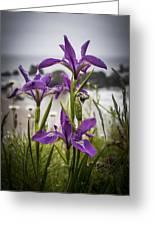 Oregon Iris At The Beach Greeting Card